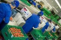 Praca Anglia na produkcji w przetwórni przy pakowaniu Chartham do maja 2014