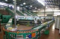 Oferta pracy w Anglii na produkcji w pakowalni owoców od zaraz Rochester