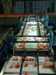 Bez znajomości języka Niemcy praca na produkcji sortowanie Zwickau