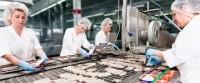 Norwegia praca od zaraz dla Polaków na produkcji rybnej bez języka Kopervik