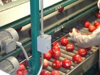 Oferta pracy w Norwegii od zaraz pakowanie owoców na produkcji Trondheim