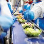 Praca Holandia na produkcji sałatek przy pakowaniu na taśmie bez języka