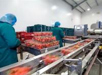 Holandia praca dla par od zaraz bez języka przy pakowaniu owoców i warzyw