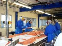 Oferta pracy w Anglii na produkcji rybnej przy filetowaniu Plymouth