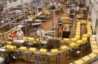 Oferta pracy w Holandii w Zeewolde na produkcji serów przy pakowaniu
