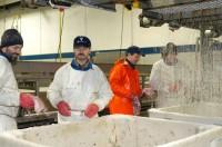 Norwegia praca bez znajomości języka na produkcji w przetwórni Bergen