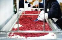 Praca w Holandii przy pakowaniu sałatek owocowych od zaraz Hoorn