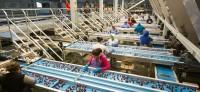 Praca Niemcy sortowanie owoców na produkcji bez znajomości języka Essen