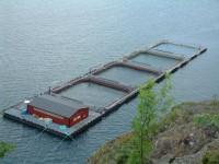 Oferta pracy w Danii na produkcji w przemyśle rybnym bez języka Kopenhaga