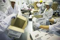 Holandia praca na produkcji pakowanie art. spożywczych bez języka Eindhoven