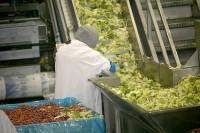 Od zaraz praca Holandia na linii produkcyjnej sałatek Hoorn bez języka holenderskiego