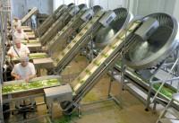 Bez znajomości języka praca Holandia na produkcji żywności mrożonej Tilburg