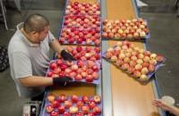 Bez znajomości języka praca Niemcy pakowanie owoców przy taśmie od zaraz Stuttgart