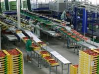Niemcy praca przy pakowaniu owoców bez znajomości języka od zaraz Berlin