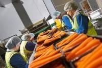 Bez znajomości języka praca w Holandii na produkcji przy pakowaniu Uden