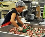Holandia praca bez znajomości języka na produkcji przy pakowaniu słodyczy