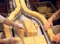Bez znajomości języka dam pracę w Holandii produkcja serów Almere