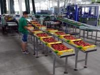Pakowanie owoców od zaraz praca w Szwecji na produkcji bez języka Sztokholm