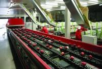 Sortowanie owoców praca Norwegia na produkcji bez znajomości języka Sandefjord