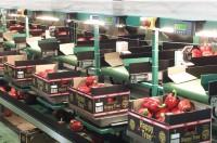 Praca Anglia w Stevenage bez znajomości języka przy pakowaniu warzyw