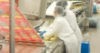 Bez języka Norwegia praca pakowanie sera na produkcji Fredrikstad od zaraz
