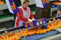 Atrakcyjna praca Anglia na produkcji od zaraz przy pakowaniu owoców Madistone