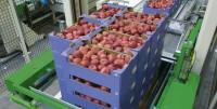 Aktualna praca w Anglii przy pakowaniu owoców od zaraz w Canterbury