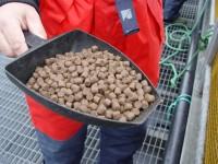Oferta pracy w Norwegii bez języka od zaraz produkcja karmy dla ryb w Kopervik