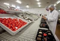 Norwegia praca w Oslo od zaraz bez znajomości języka przy pakowaniu słodyczy