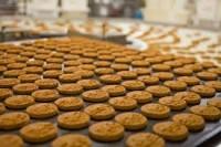 Bez języka praca w Holandii od zaraz przy pakowaniu ciastek 2018 Scherpenzeel