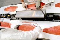 Oferta pracy w Danii bez języka na produkcji rybnej filetowanie od zaraz Hirtshals